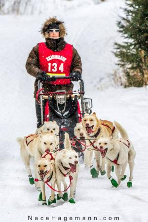 Chesterfield, MA: Dogsled Racing