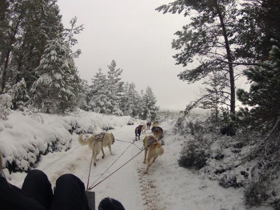 Cairngorm Sleddog Centre: Out on the trail 2