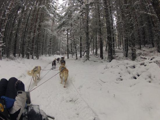 Cairngorm Sleddog Centre: Out on the trail 1