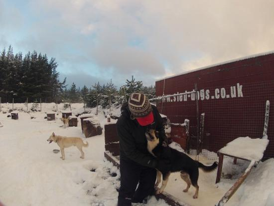 Cairngorm Sleddog Centre: Meeting the dogs