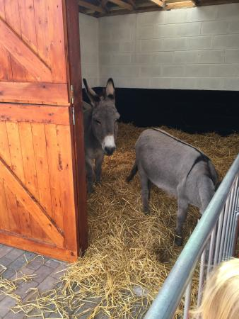 The Wonkey Donkey Visitors Centre