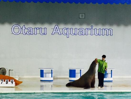 小樽水族館のアザラシたち - Picture of Otaru Aquarium, Otaru - TripAdvisor