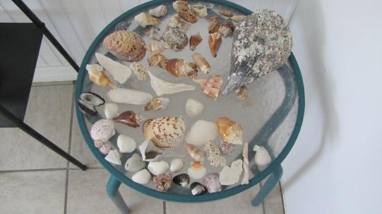 Castaways Beach and Bay Cottages: shells, shells, shells