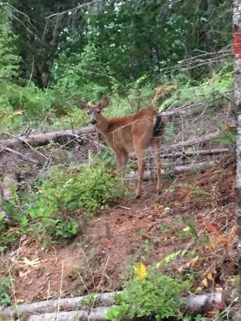 L l stub stewart state park campground reviews photos for Stub stewart cabins