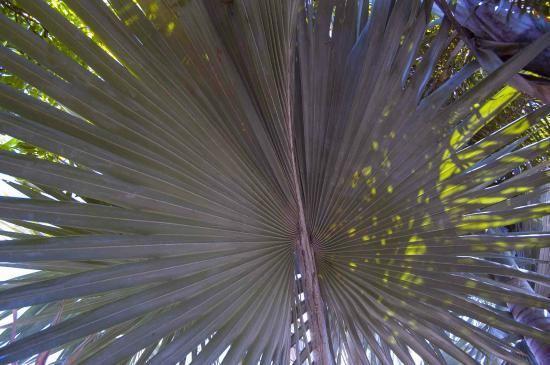 Jurassic Cycad Gardens