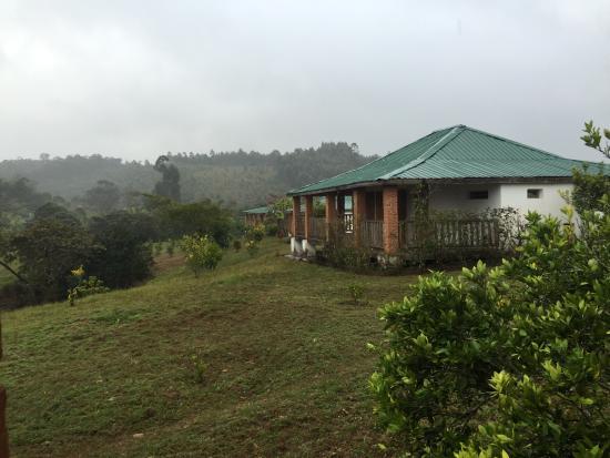 Photo of Eulophiella Andasibe