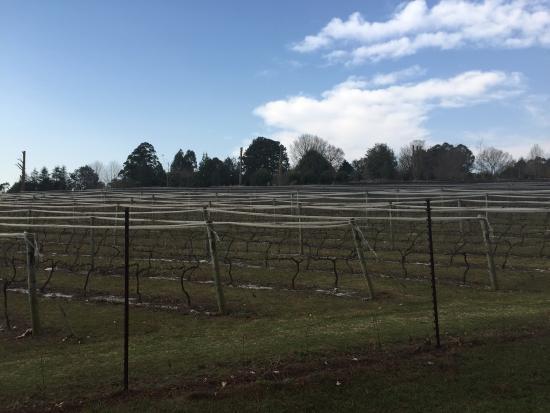 Landscape - Abingdon Wine Estate Photo