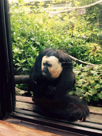 Monkey World: photo1.jpg