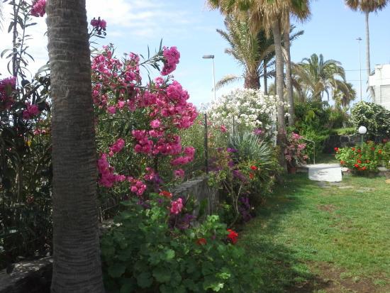El Capricho Apartamentos: выход на пляж