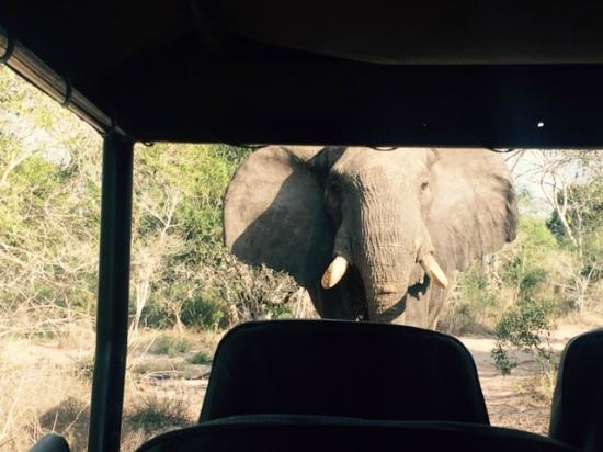 Tembe Elephant Park Accommodation: Elephant gets up close and personal!