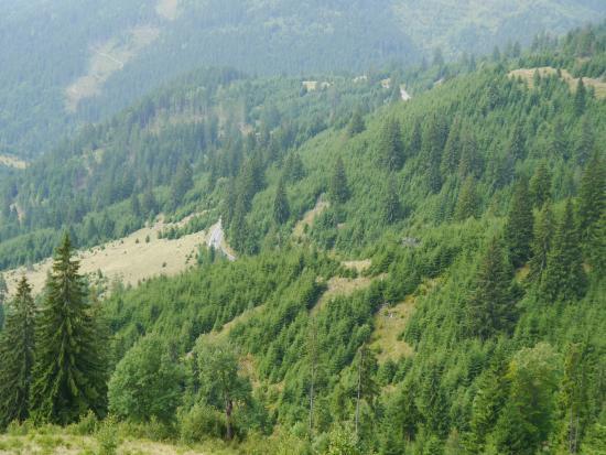 Harghita Bai, Ρουμανία: erdő
