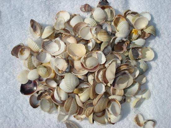 Premier Compass Hotel Odessa: sea shells