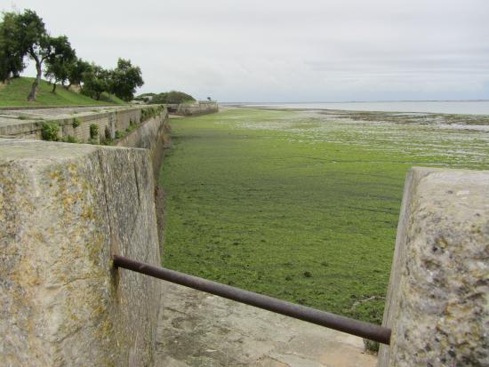 Port de Saint-Martin-de-Ré: Vue mer