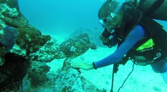 Pulau Praslin, Seychelles: plongée WhiteTip Divers