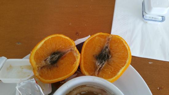 Hotel Pinomar : orange très très mûre
