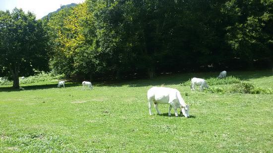 Veroli, Italië: Prato di campoli