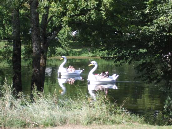 Francueil, Γαλλία: pedal swans on the le cher