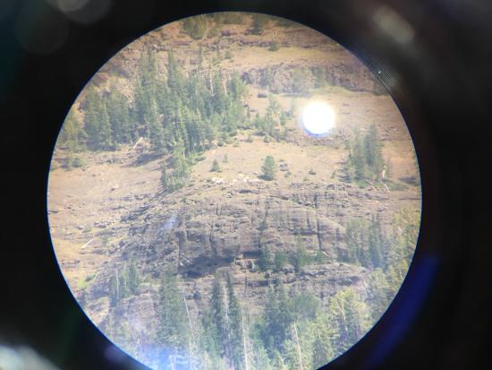 Lamar Valley: Herd of mountain goats through a spotting scope
