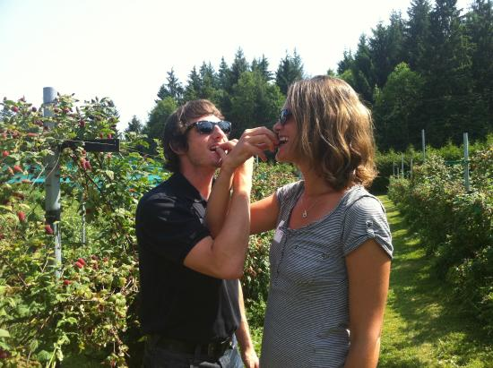 Comox, Canada: Visit of an organic farm and fruit winery : delicious blueberries!