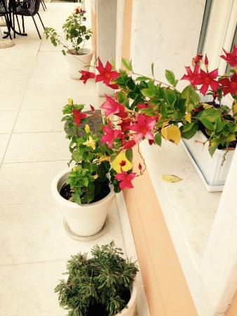 Hotel Villa Anthea: Beautiful flowers at the entrance