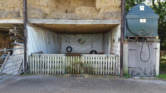 Etwall, UK: Highfields Happy Hens Farm