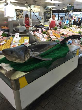 โบลตัน, UK: Entire shark for sale!