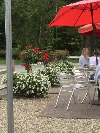 Williamsburg, ماساتشوستس: Flowers of late summer.
