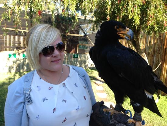 Eagle Encounters South Africa: Fantastic experience