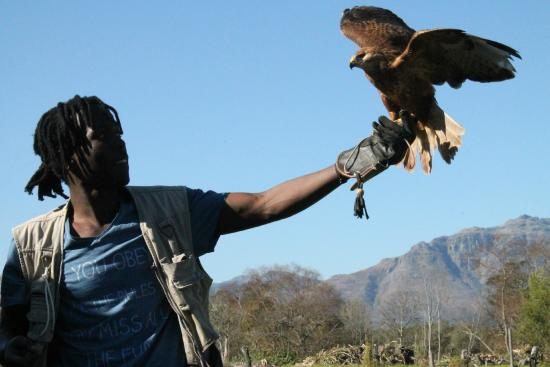 Eagle Encounters South Africa: Incredible, passionate staff