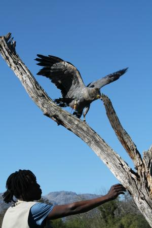 Eagle Encounters South Africa: Falconry displays are brilliant