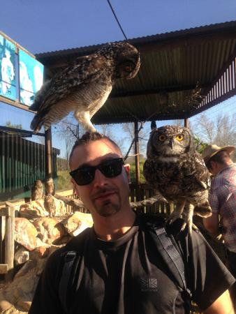 Eagle Encounters South Africa: Fun with the owls!