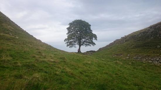 Национальный парк Нортумберленд, UK: photo4.jpg