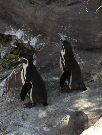 Bilde fra Zoológico Nacional de Chile