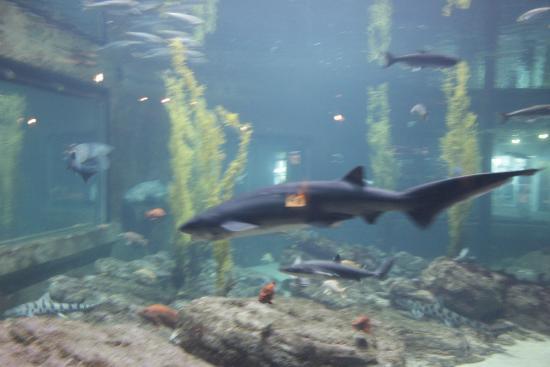 Foto De Monterey Bay Aquarium Monterrey Menterey