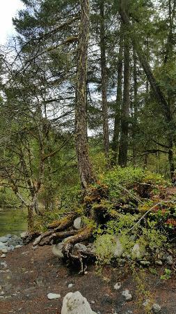 Nanaimo, Canadá: Englishman River Falls Provincial Park