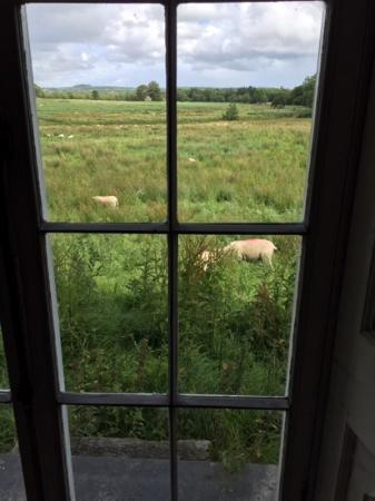 view out from the main house at Strokestown