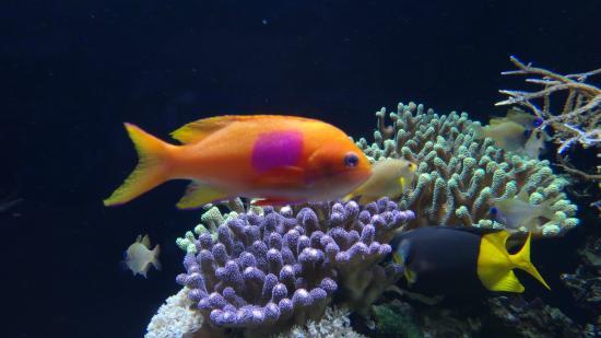 Oceanographic Museum of Monaco: Fish