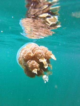 Sunset Beach : Jellyfish Lake