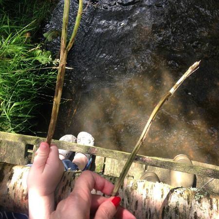 Pleasant Streams Farm Camping: Pooh Sticks!