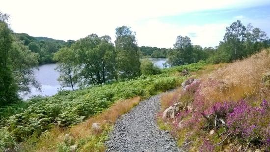 Лесопарк Галлоуэй, UK: on loch trool walk with loch in view