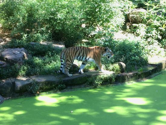 Schwaig bei Nuernberg, Германия: Tiergarten Nuernberg
