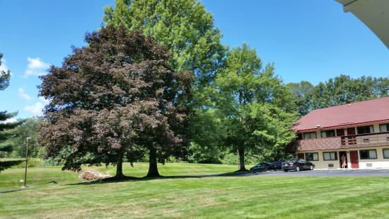 Red Roof Inn Boston - Southborough/Worcester: Trees in the common grounds between the buildings.