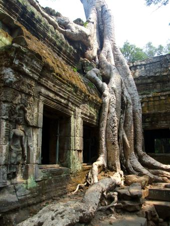 Angkor Thom: The spooky giant tress of Tha Prohm