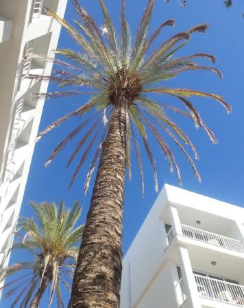 Ibiza Rocks Hotel: Sunbathing View