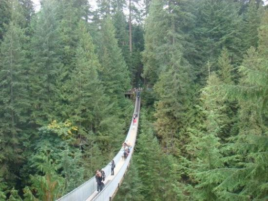 Capilano Suspension Bridge and Park: Visual da ponte