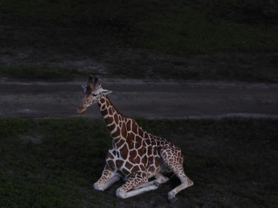 Disney's Animal Kingdom Lodge: Savanna View Room - View