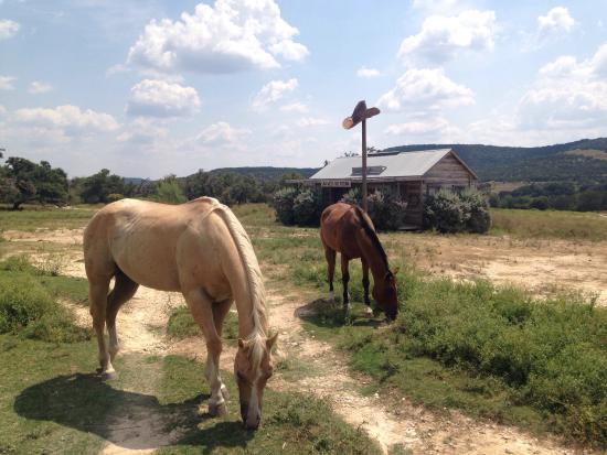 Dixie Dude Ranch: photo0.jpg