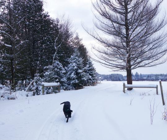 Brantwood, WI: Cross Country Ski Trails on Palmquist Farm