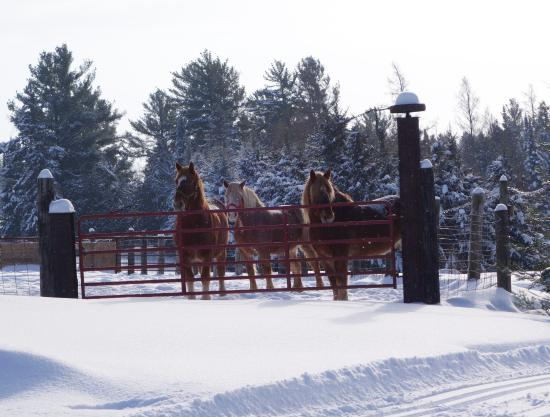 Brantwood, Висконсин: Horses that pull the sleigh at Palmquist Farm