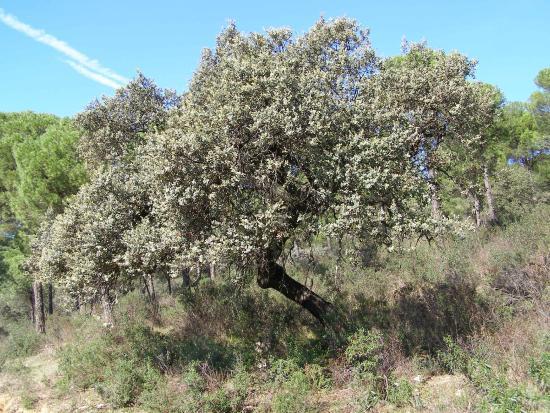 Parque Natural Cardena Montoro: naturaleza 100 x 100